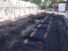 Soil placed, beds measured and prepped!