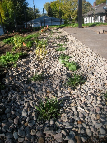 TD-dry creek bed finished