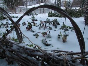 While our gardens maybe frozen, our season has already begun.