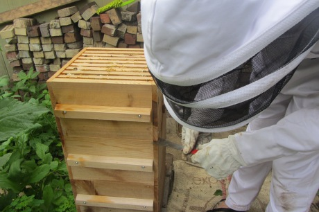 Warre Hive without top. 2015